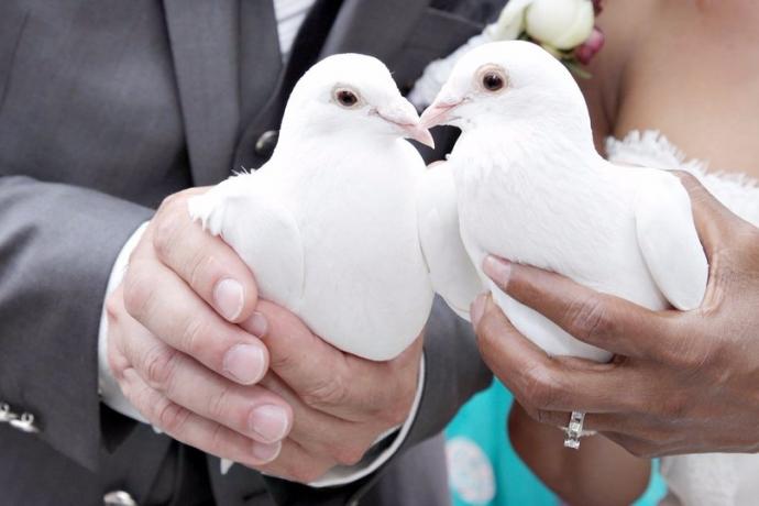 Het Bruidsduifje